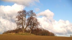 Steinfurther Hügelgrab
